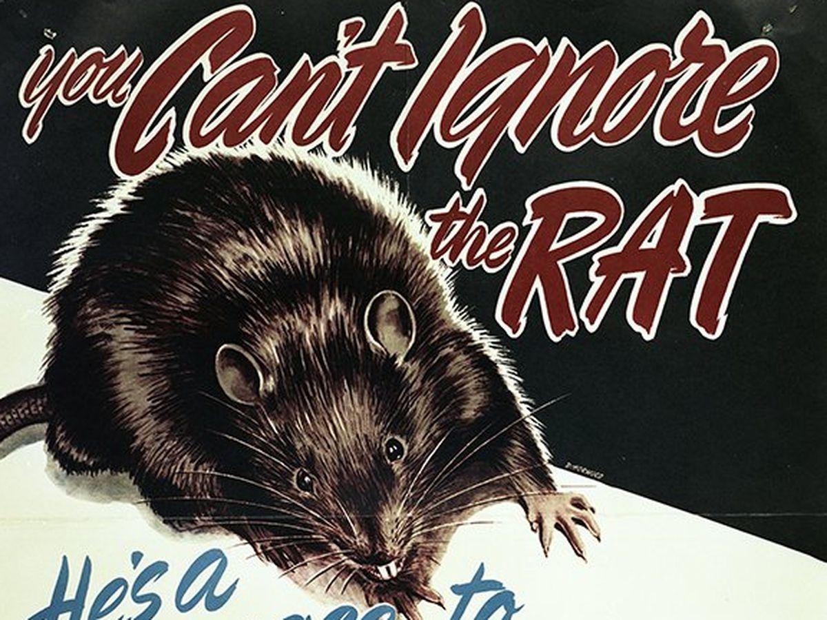 Canadá impoluto: no queda ni una rata en Alberta